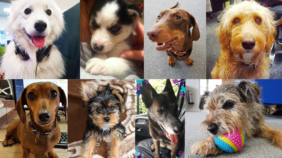 Introducing the Tap Warehouse Office Dogs thumbnail