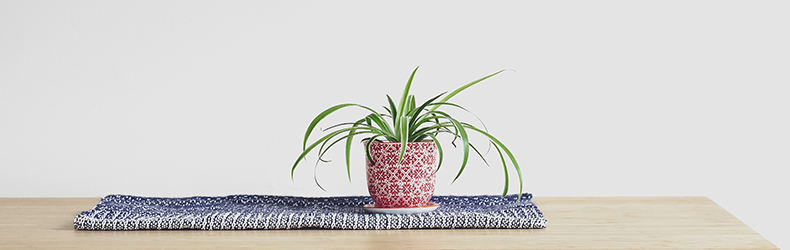 spider-plants-for-bathroom