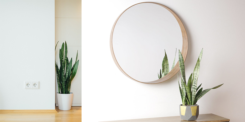 snake-plants-for-the-bathroom